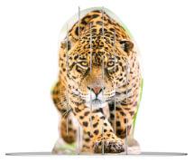 Ravensburger 180516 4S Vision Wild Cats